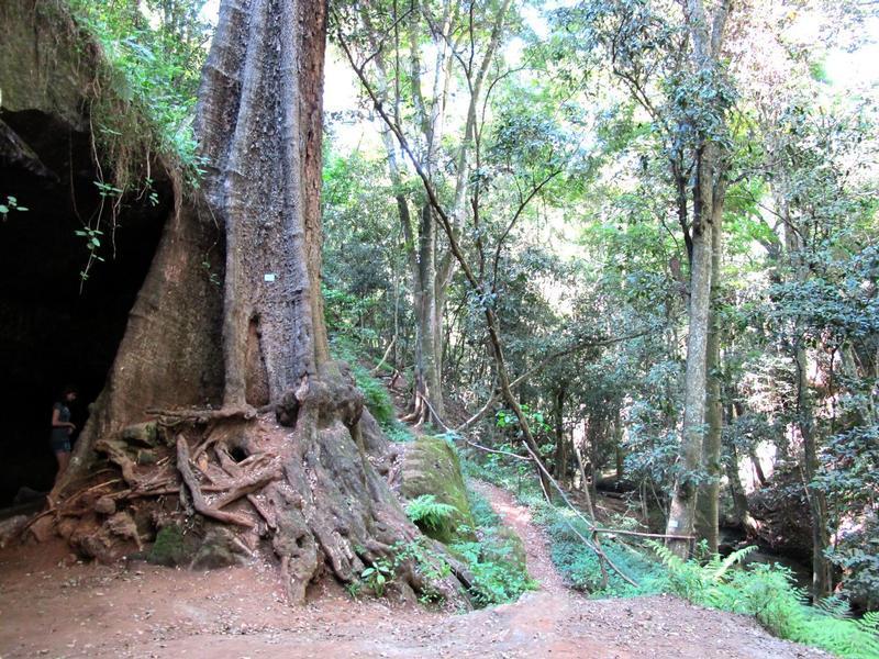 Karura Forest 1