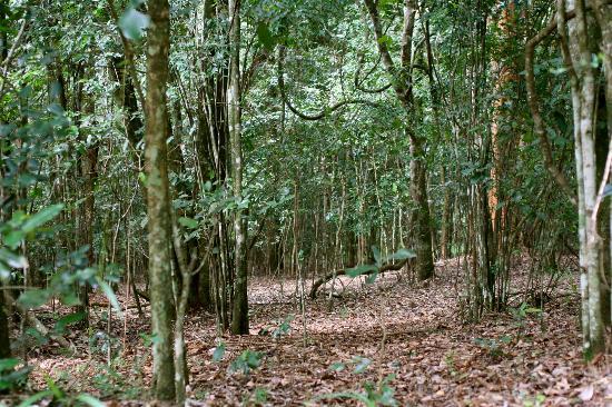 Karura Forest 2