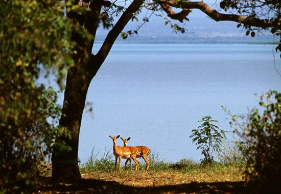 Kisumu-Impala-Sanctuary