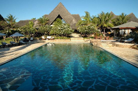 Lion In The Sun - Swimming Pool