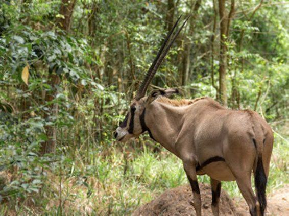 photo-by-brian-gatimu-oryx